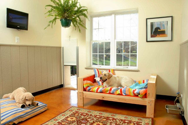 Suites For Dogs At Mountain Run Kennel